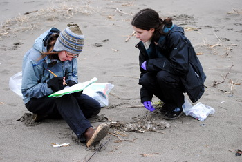 Photo of women recording beached bird data on the beach.
