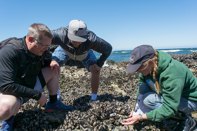 Volunteers examining a mussel bed.  Photo by Alex Derr.