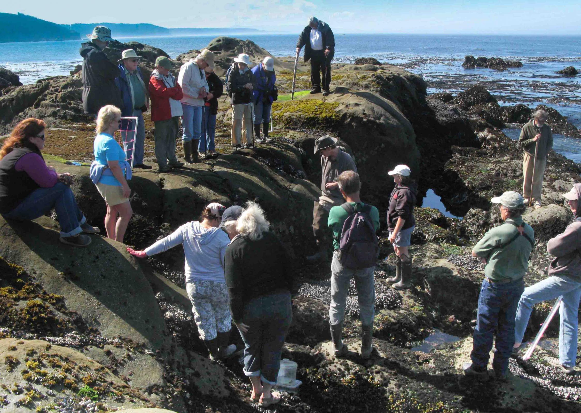 CoastWatch training on rocky shore habitats.\Photo by Daniel Anderson.