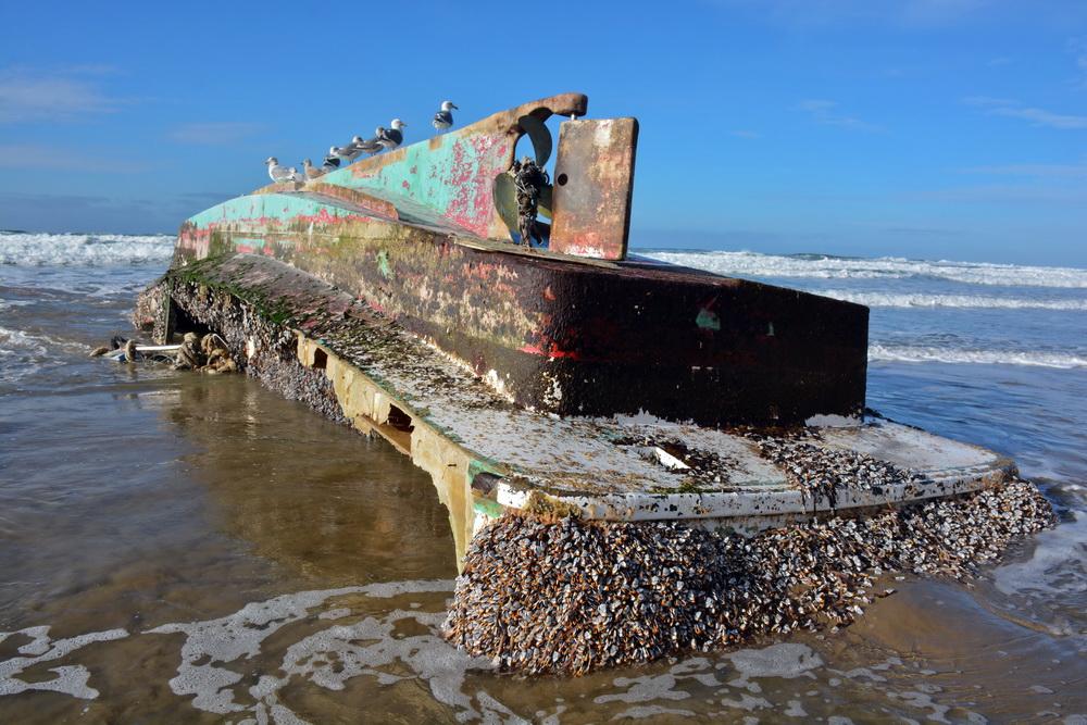 Derelict Japanese fishing vessel, debris from the tsunami, on Arcadia Beach.\Photo by Tiffany Boothe, Seaside Aquarium.
