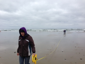 Volunteers setting up marine debris survey site.