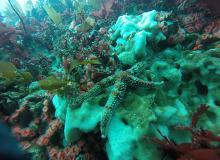 Nearshore Ocean Strategy addresses undersea habitats.  Photo courtesy of ODFW.