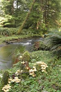 Photo of Ecola Creek and forest land, courtesy of the city of Cannon Beach.