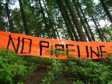 "Photo of ""No Pipeline\"" banner in front of coastal forest."