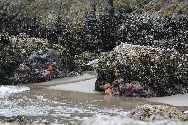 Photo of rocky shore near Cannon Beach by Mark Stalcup.