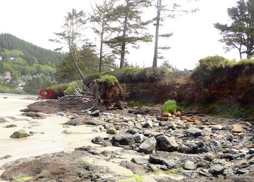 Erosion along Yachats River where it enters ocean.
