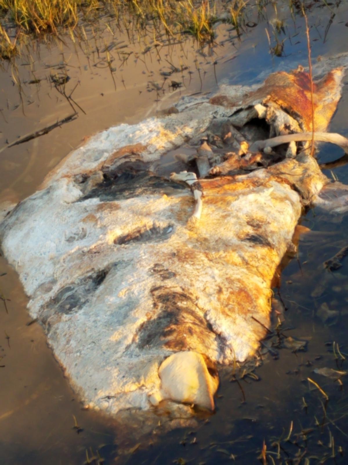 Dead Marine animal