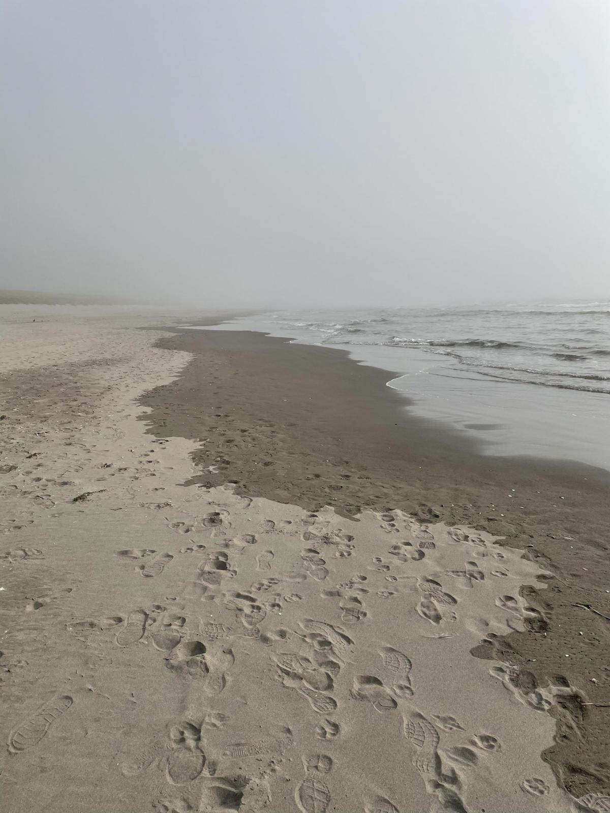 View of foggy beach