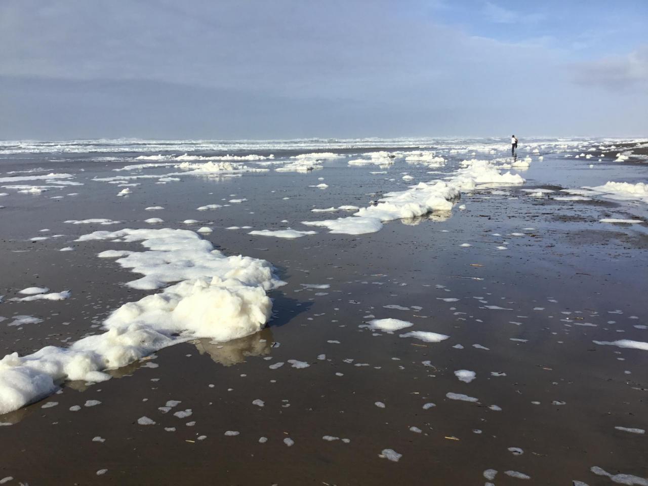 Sea foam or icebergs?