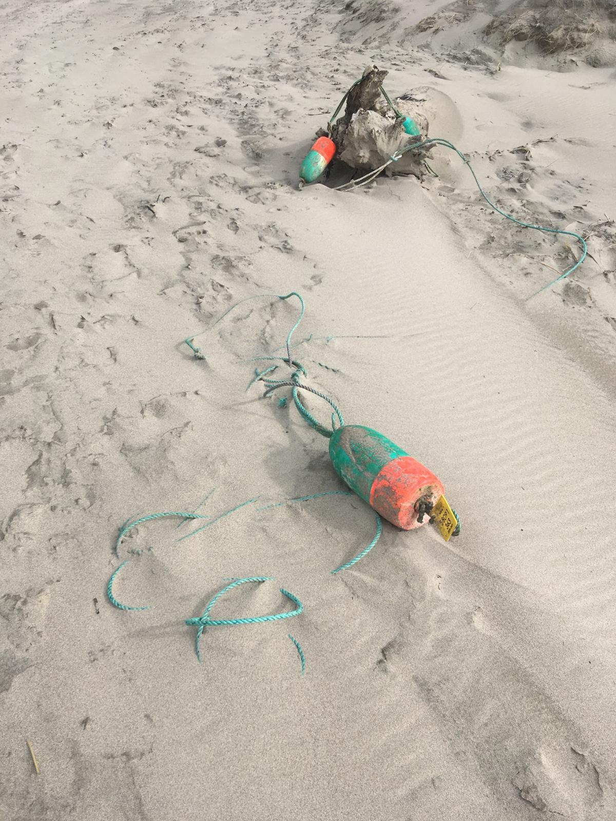 loose fishing gear in the no harvest zone of the cascade head marine reserve.