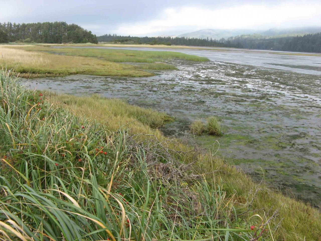 Photo of marsh on the bay side of the Sand Lake spit Photo by Jim Hauge.