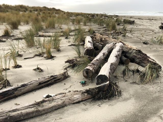 Driftwood at tip of Netarts Spit
