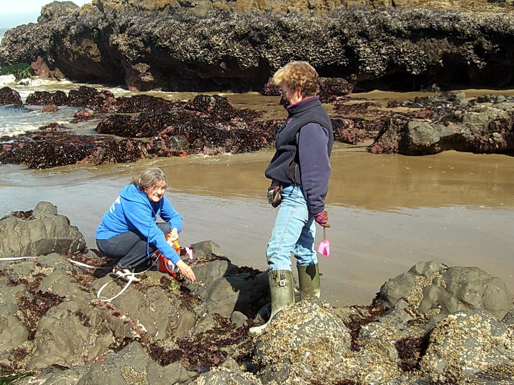Fawn Custer conducting a sea star survey, with volunteer Jessica Waddell.  Photo by Karen Heere.