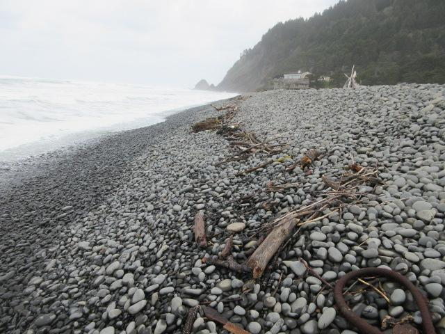 shoreline with wood and kelp