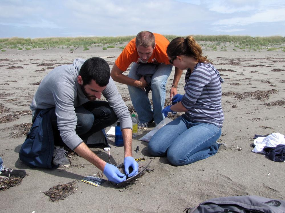 COASST volunteers at work.\Photo by Penelope Chilton.