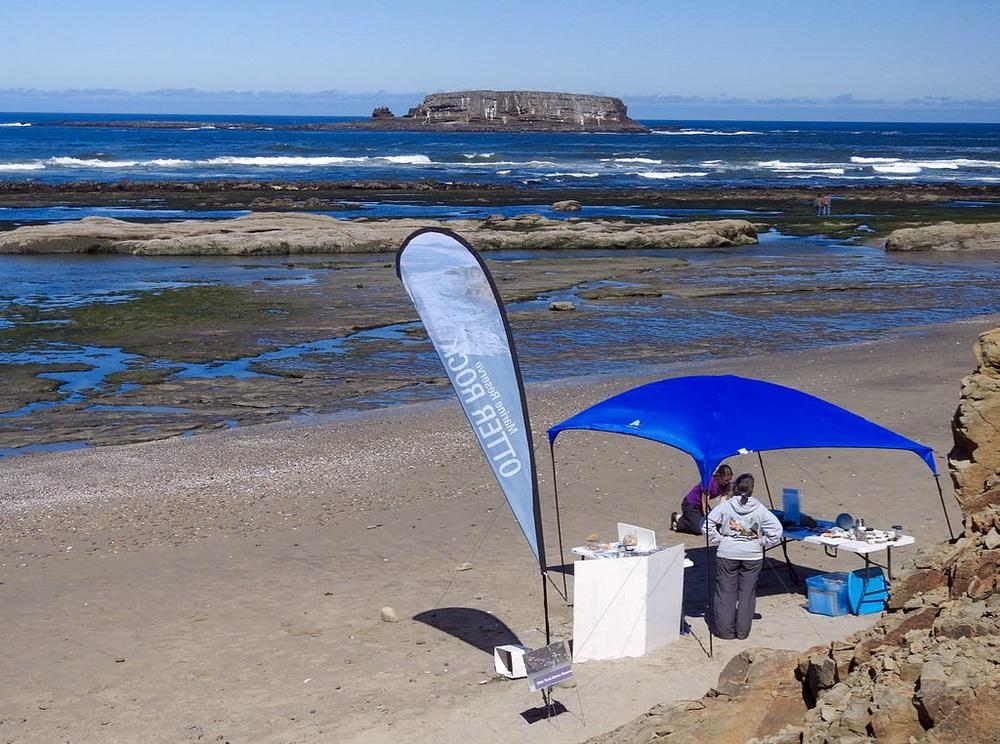 A previous Community Science Day at Otter Rock.\Photo by Cathy Tronquet.