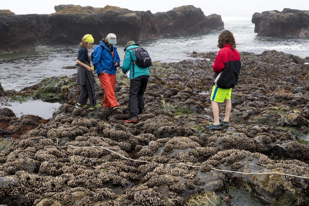 Sea star survey (with kids) at Yachats/|Photo by Rena Olson.