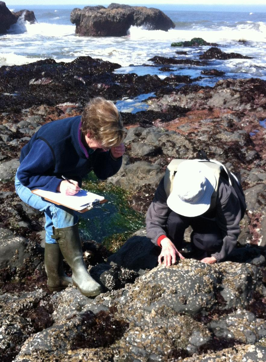 Volunteers Jessica Waddell and Karen Heere surveying sea stars.  Photo by Fawn Custer.