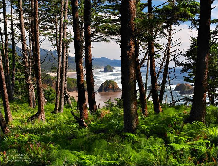 Image of Ecola State Forest Park in Oregon.