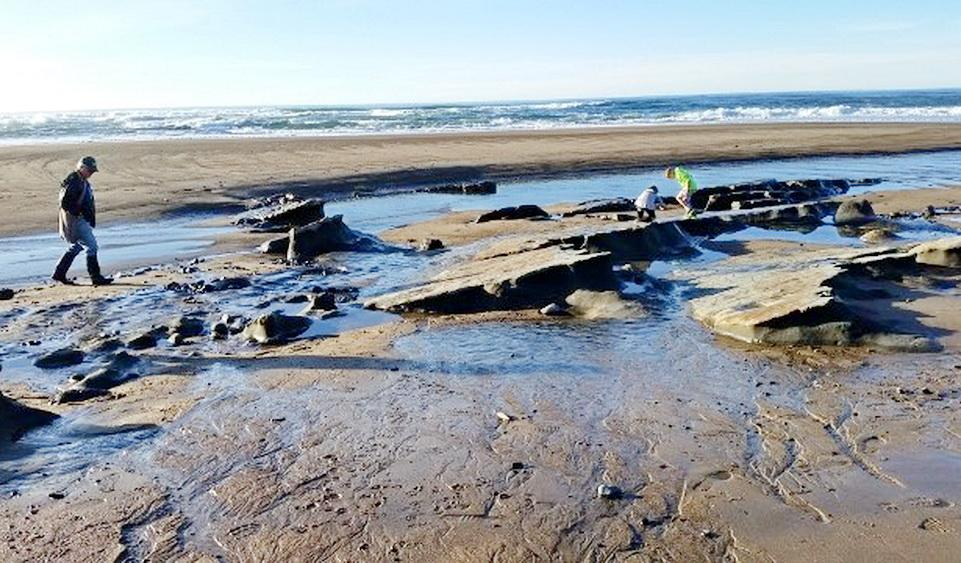 Exposed rocky shore at Gleneden Beach.\Photo by Judy Bowman-Kreitmeyer.