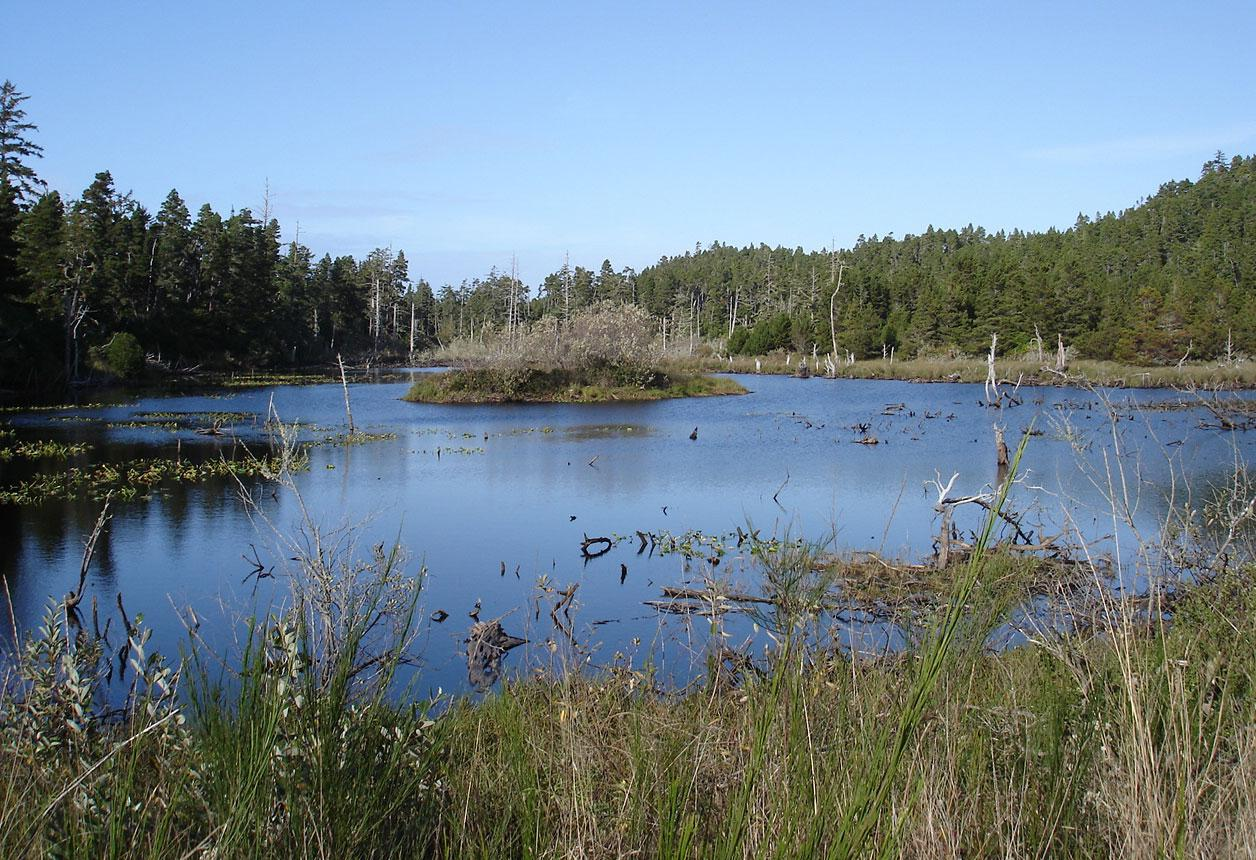 Wetland on North Spit.  Photo by Lisa Readel.