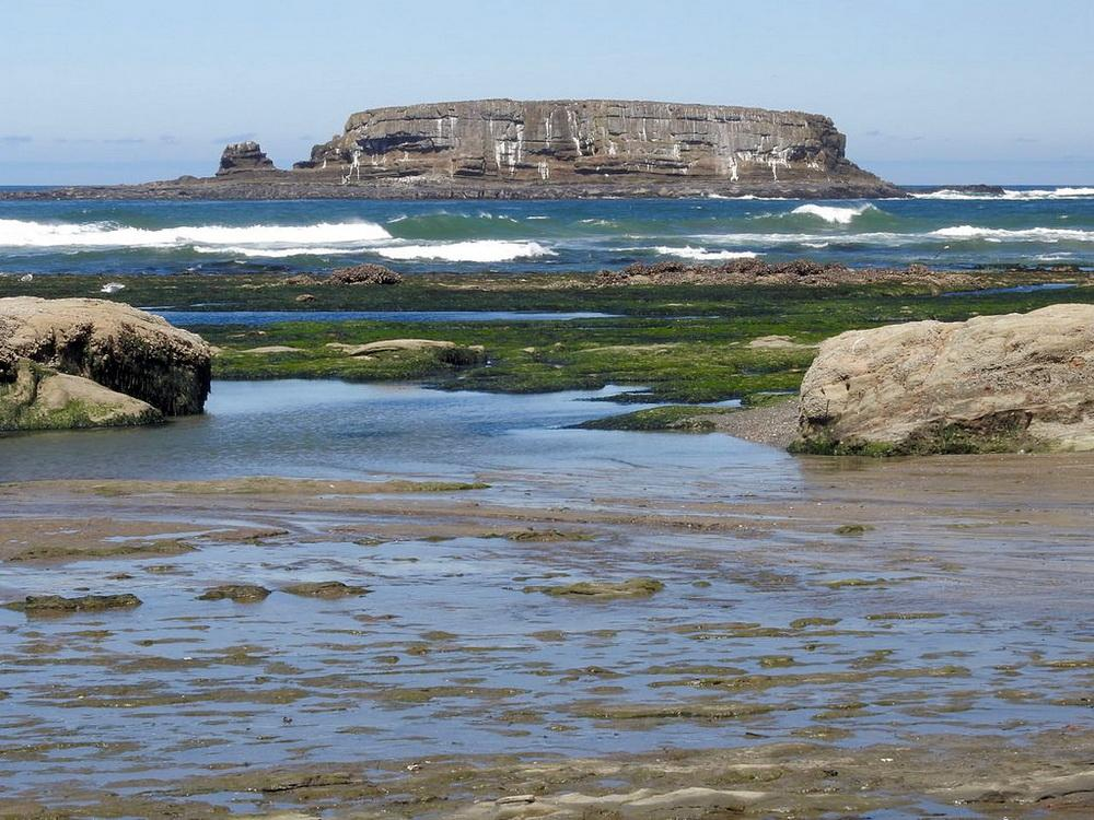 Photo of Otter Rock from shore.  Marine reserves are closer than you think!  Photo by Cathy Tronquet.