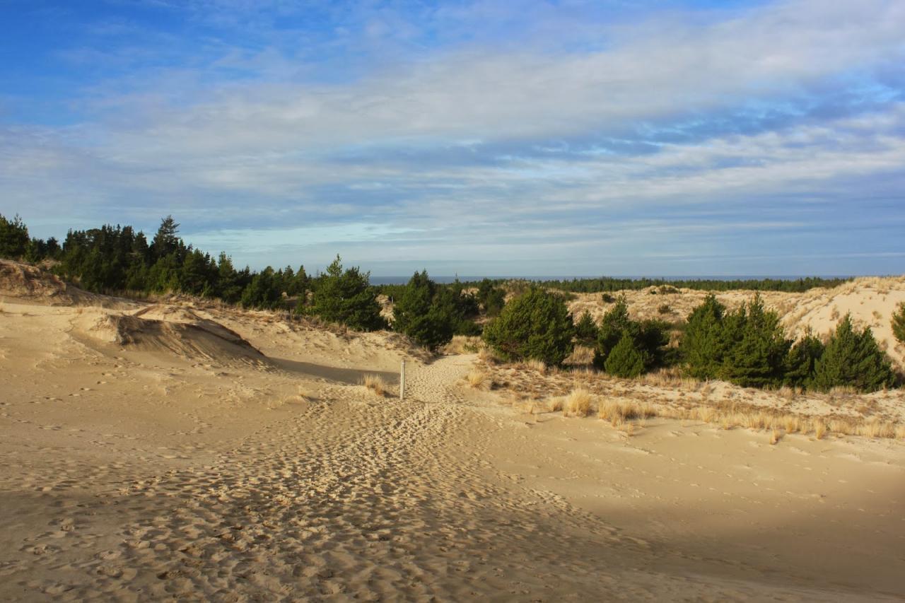 Tahkenitch dunes.