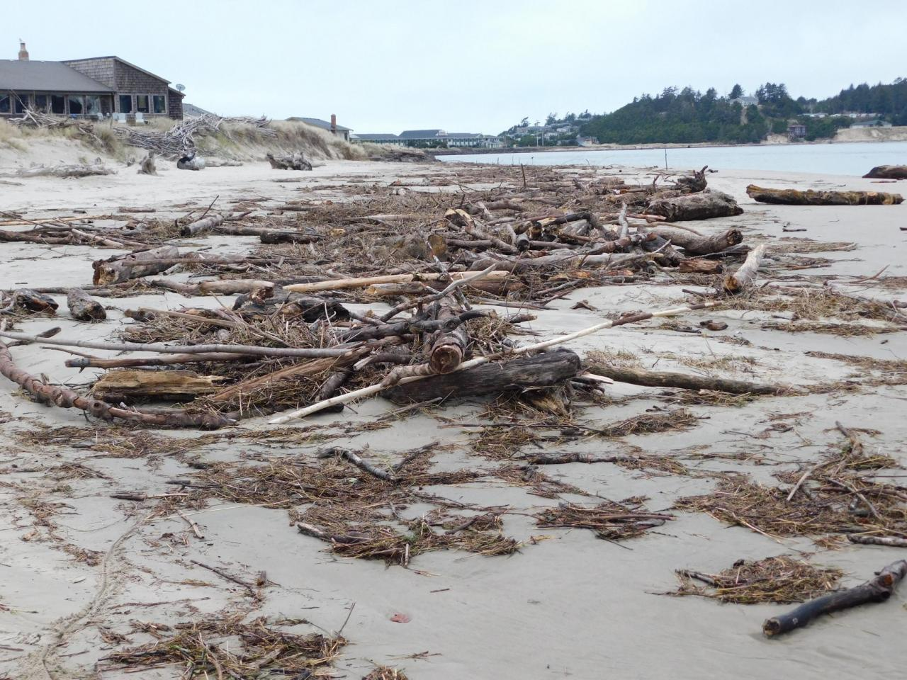 Driftwood at Alsea Bay