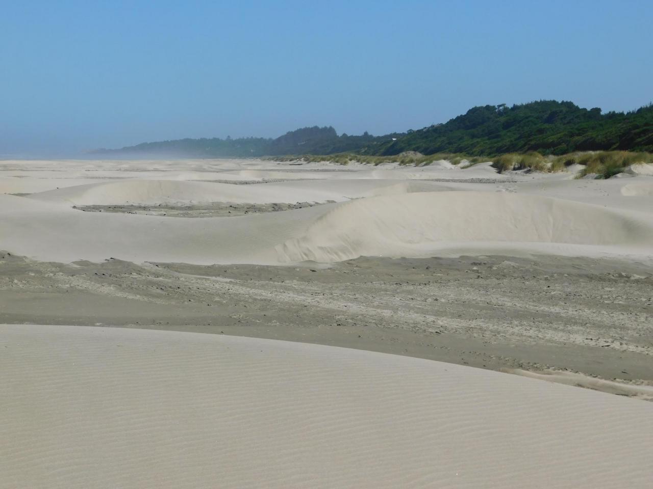 Driftwood dunes