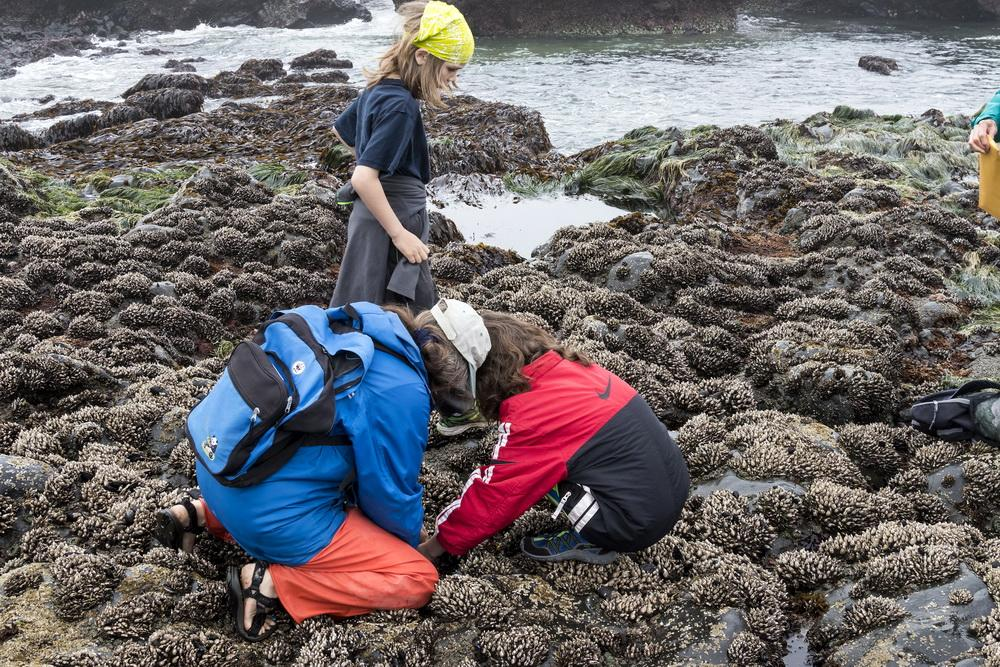 CoastWatch Volunteer Coordinator Fawn Custer  introduces students to the rocky intertidal habitat.\Photo by Rena Martin.