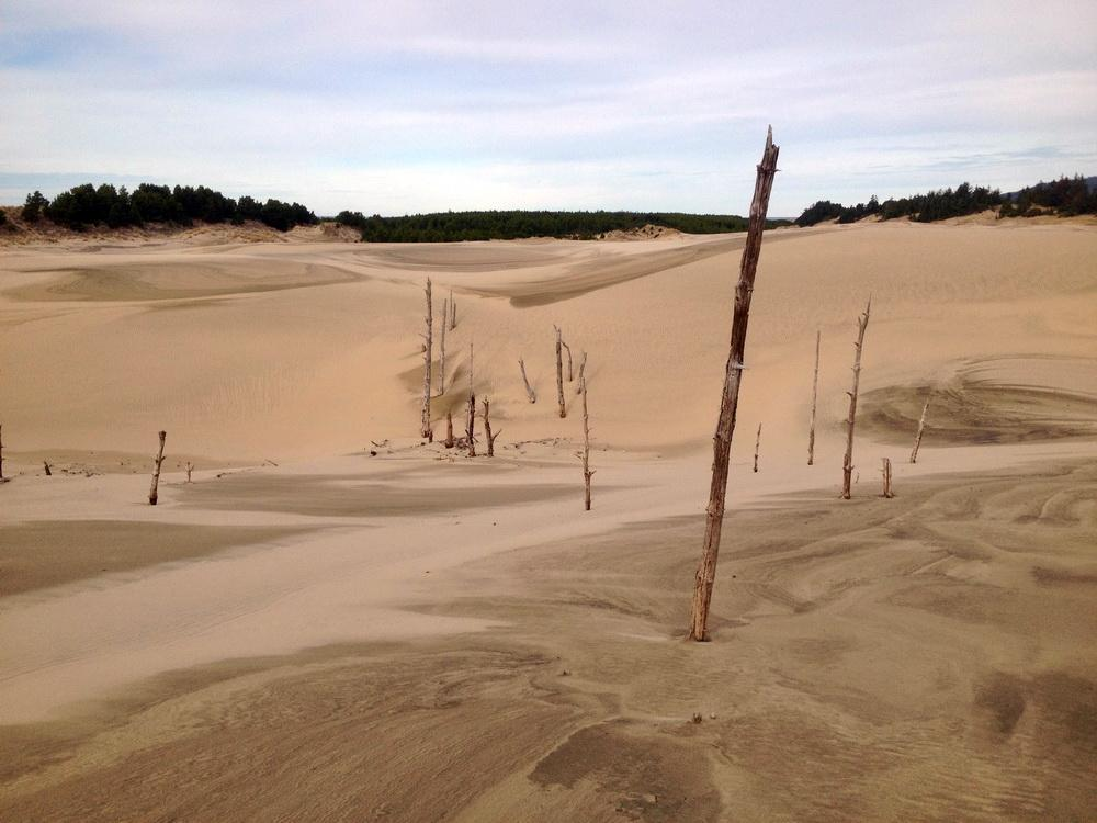 Ghost forest in the Oregon Dunes.\Photo by Dina Pavlis.