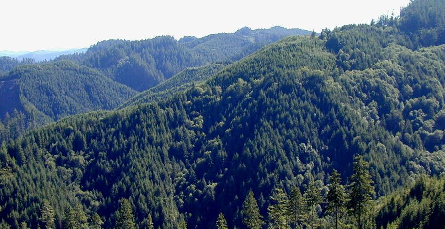 Elliott State Forest. Photo courtesy of State of Oregon.