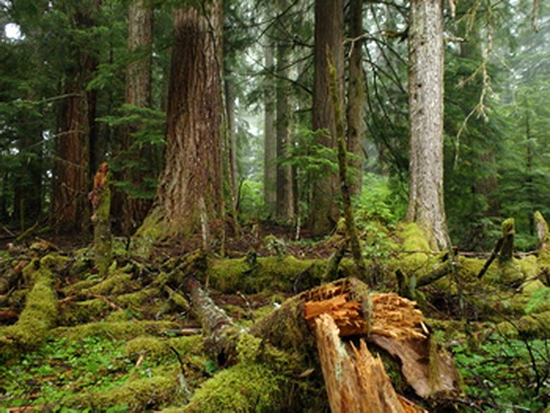 Coastal forest habitat. Photo courtesy of U.S. Forest Service.