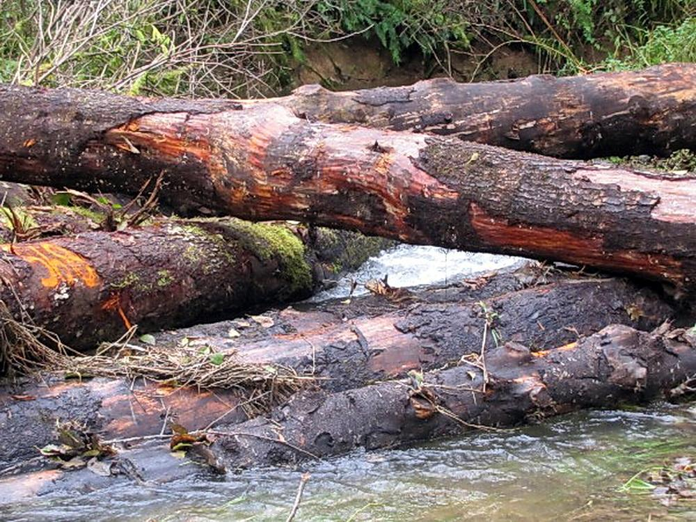 Large woody debris placed in Mill Creek during restoration project.