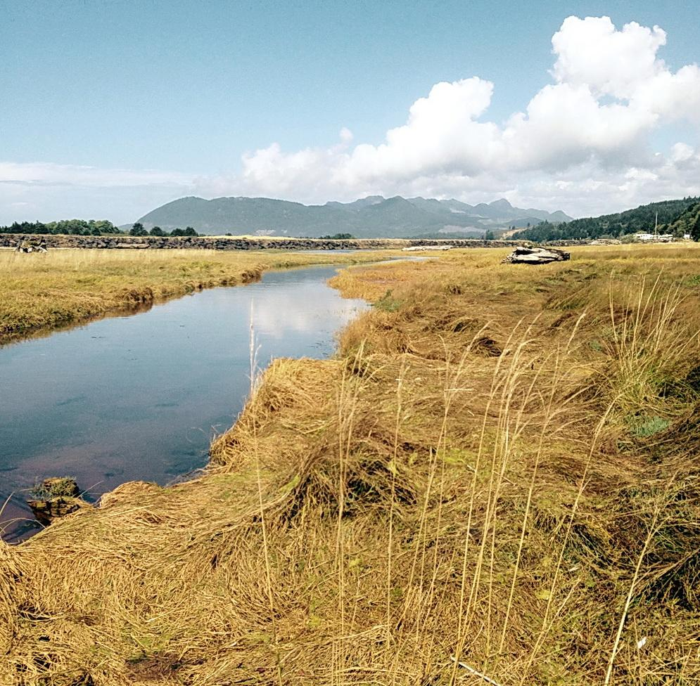Marshes of the Nehalem at the south jetty, downstream from the area to be protected.\Photo by Allison Asbjornsen.