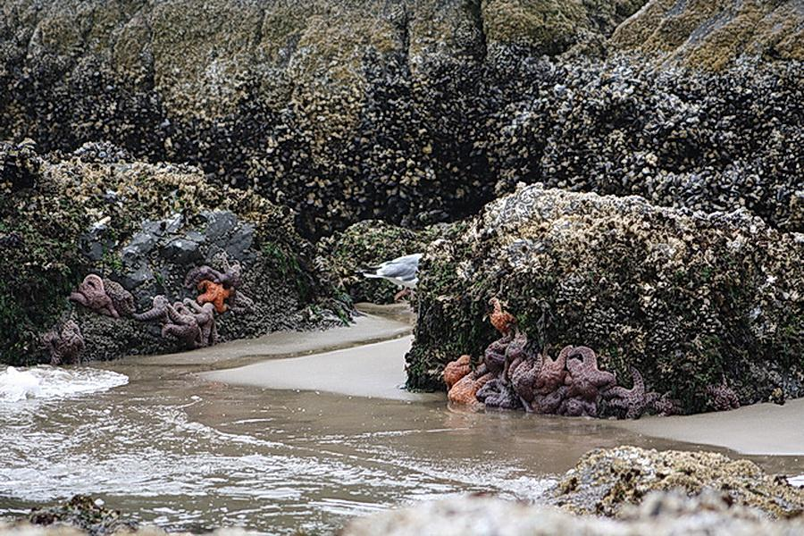 Rocky shores near Cannon Beach.\Photo by Mark Stalcup.
