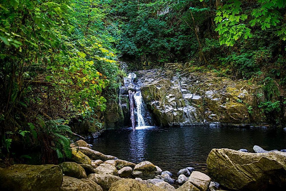 Sweet Creek Falls.\Photo by Dennis White.