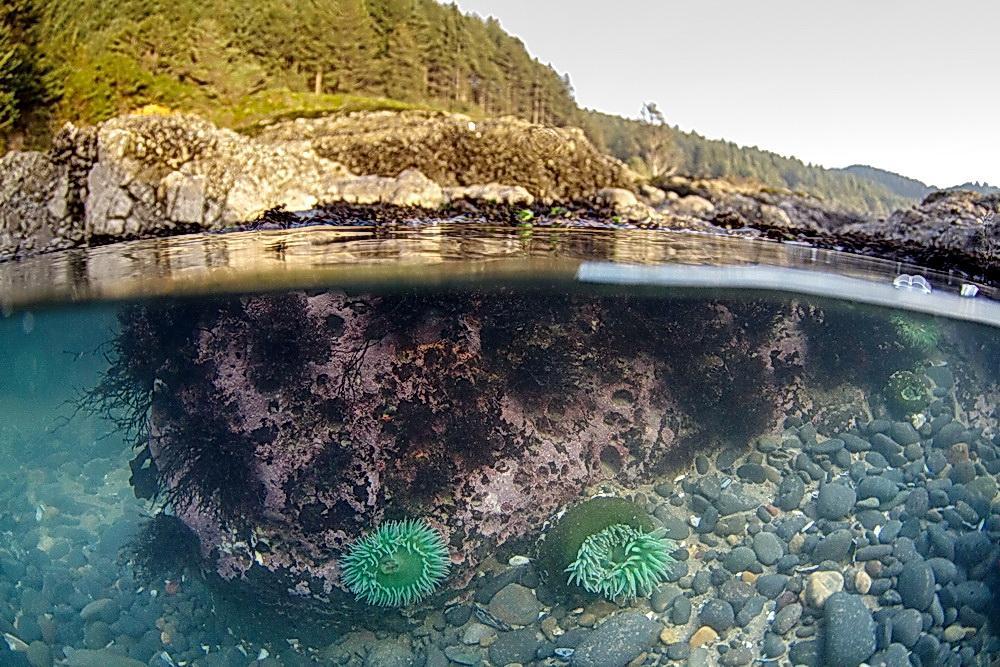 Tidepool at Cape Perpetua.\Photo by Briton Ogden.