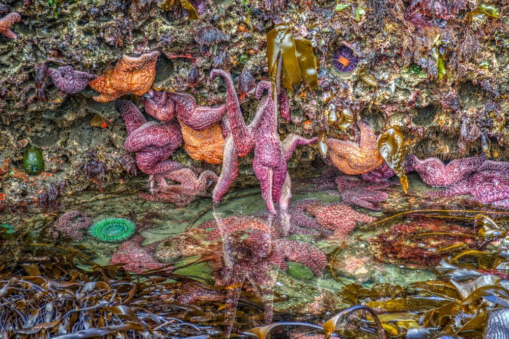 Typical tidepool life.\Photo by Gregory Henton.