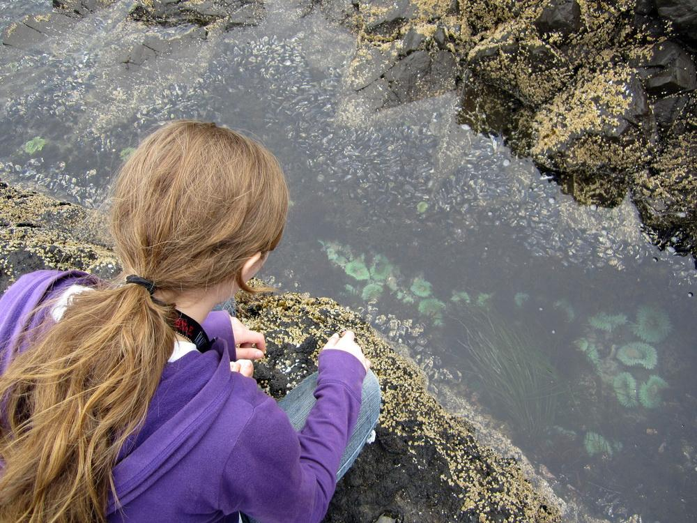 Tidepool observing.  Photo courtesy of ODFW.