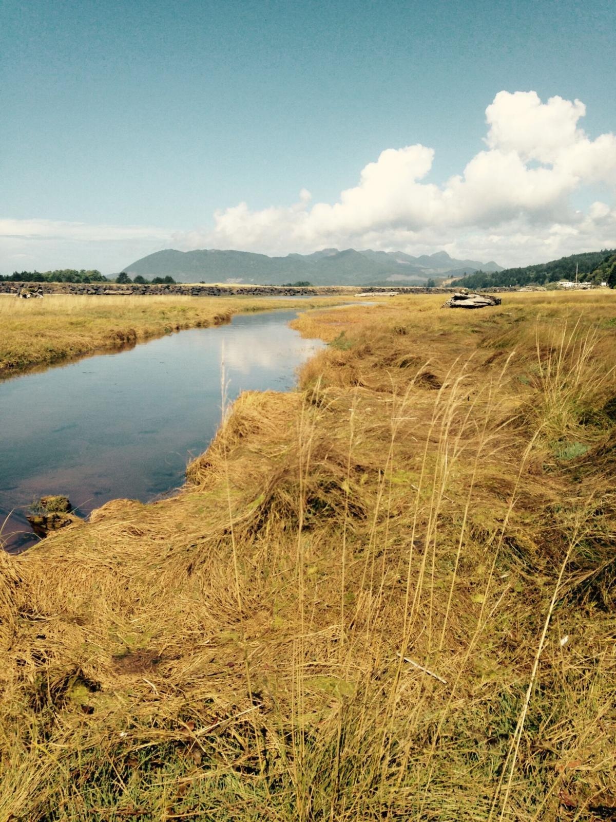 Marsh at the Nehalem River south jetty. | Photo by Allison Asbjornsen.