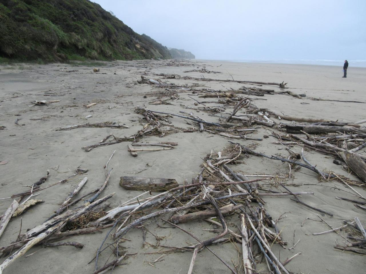 Beach littered with wood pieces