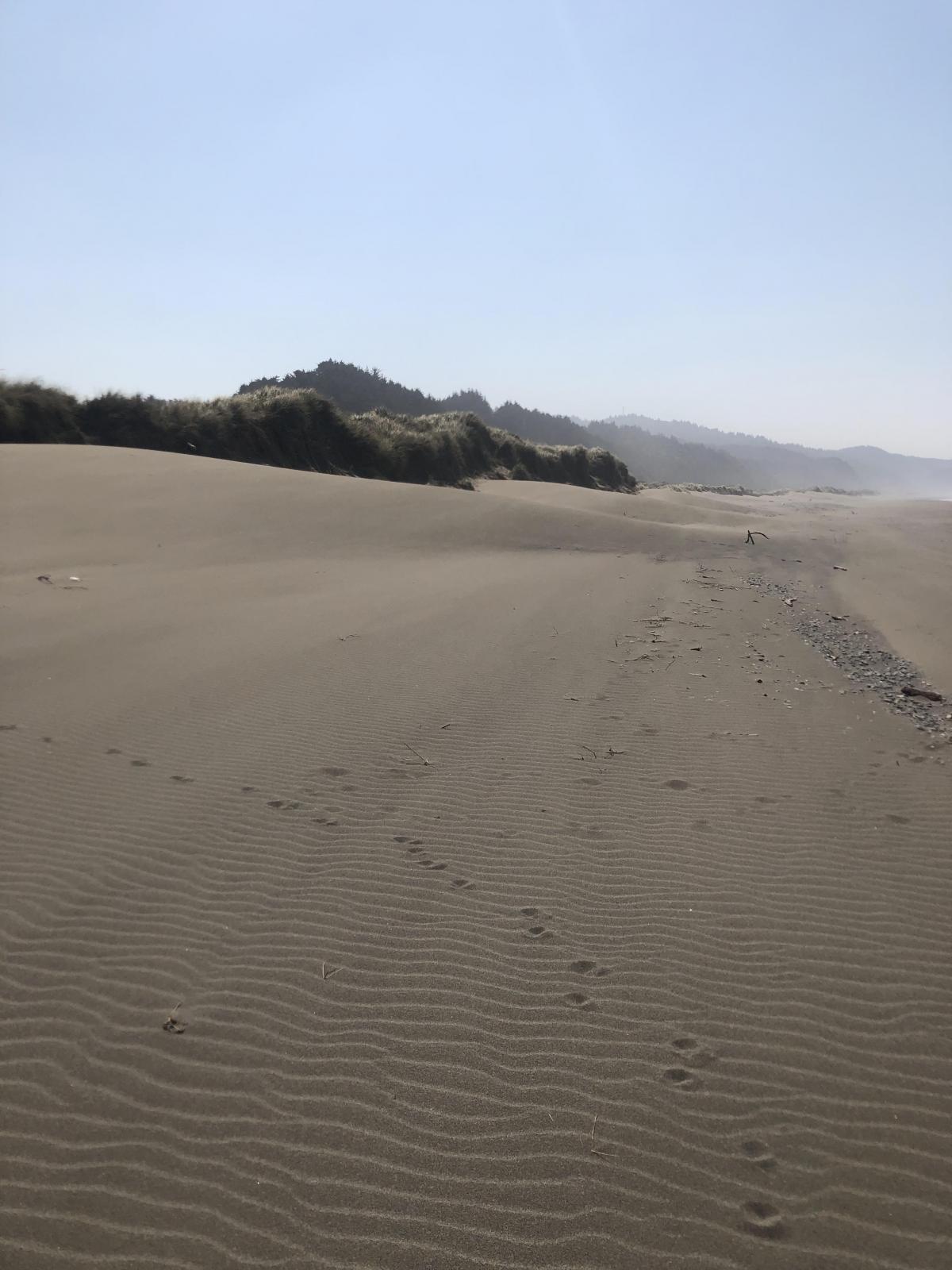 sand movement