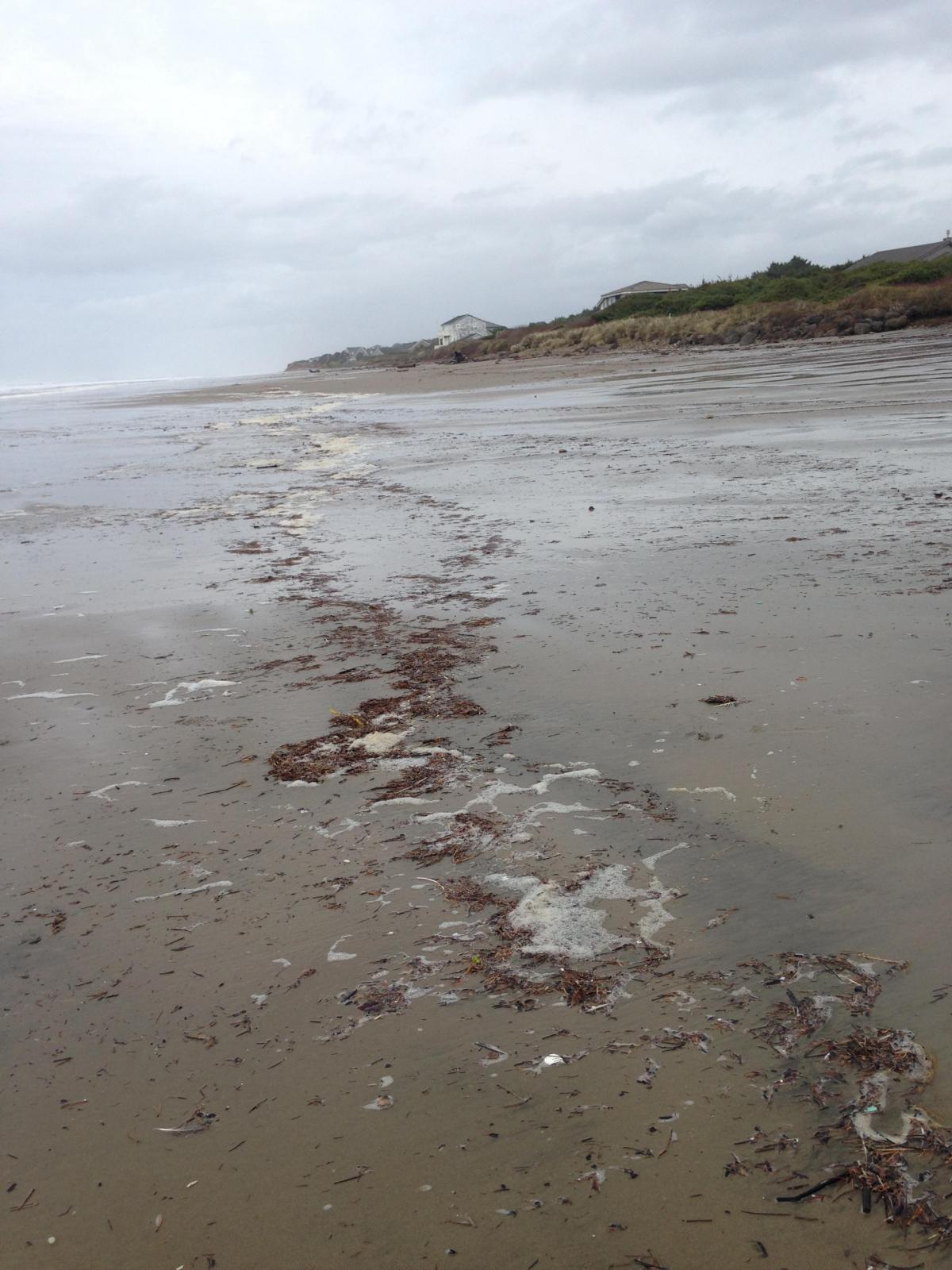 Fish oregon rogue river fishing at gold beach autos post for Oregon coast fishing report