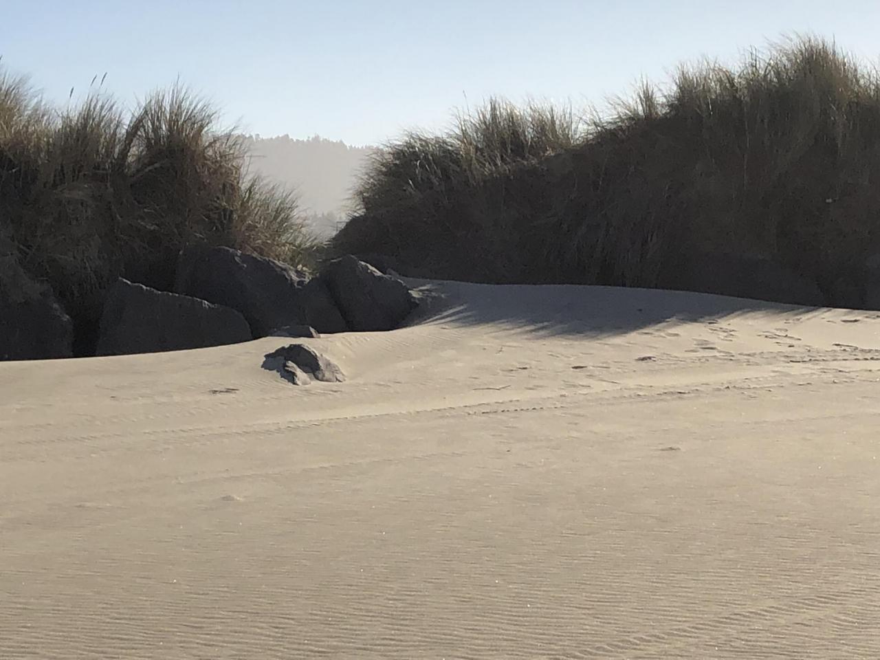 Sand infill against the Umpqua North Jetty