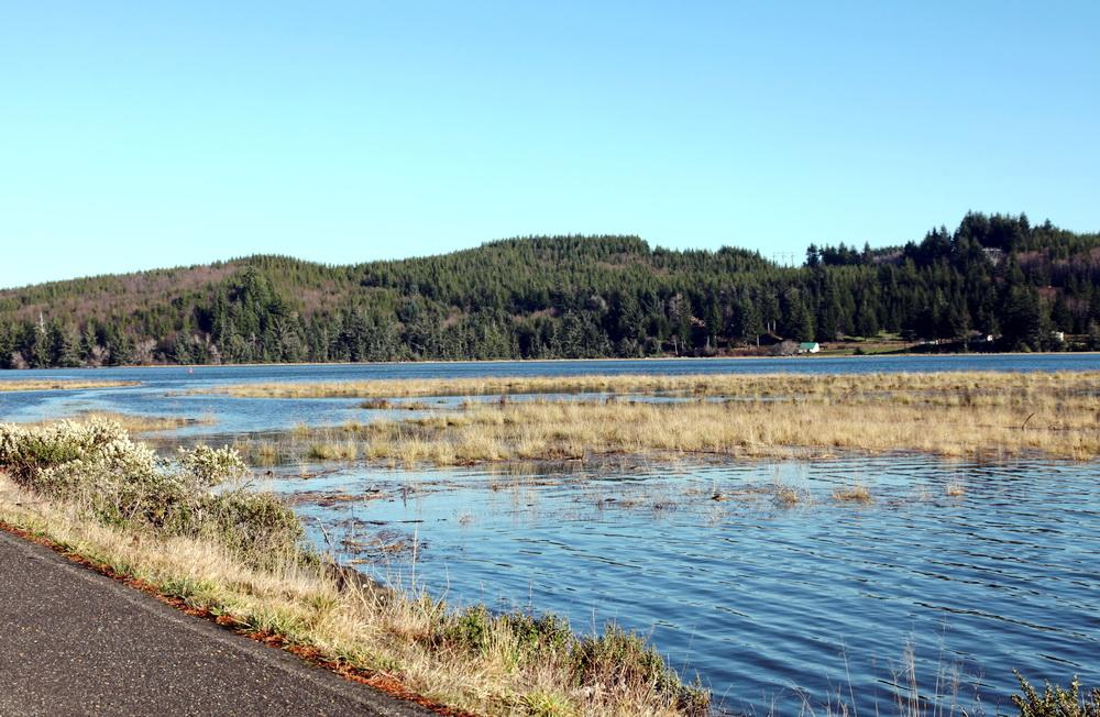 An upper Yaquina Bay wetland swamps by a high tide.\Photo by Meg Reed.