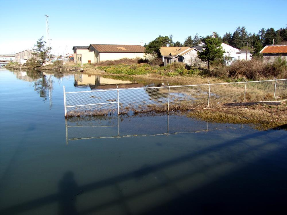 King Tide swamps Charleston shoreline.\Photo courtesy of Raincoast.