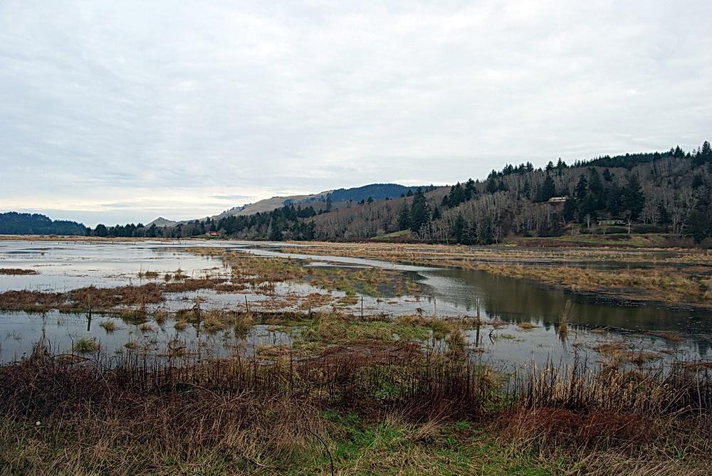 Salmon River marshes in flood at King Tide. Photo by Corrina Chase.