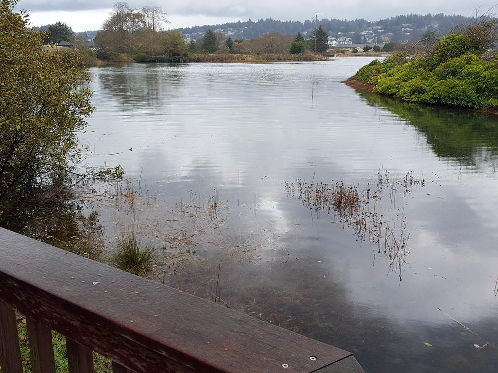 A king tide fills Yaquina Bay, providing a preview of sea level rise with climate change.\Photo by Linda Reid.