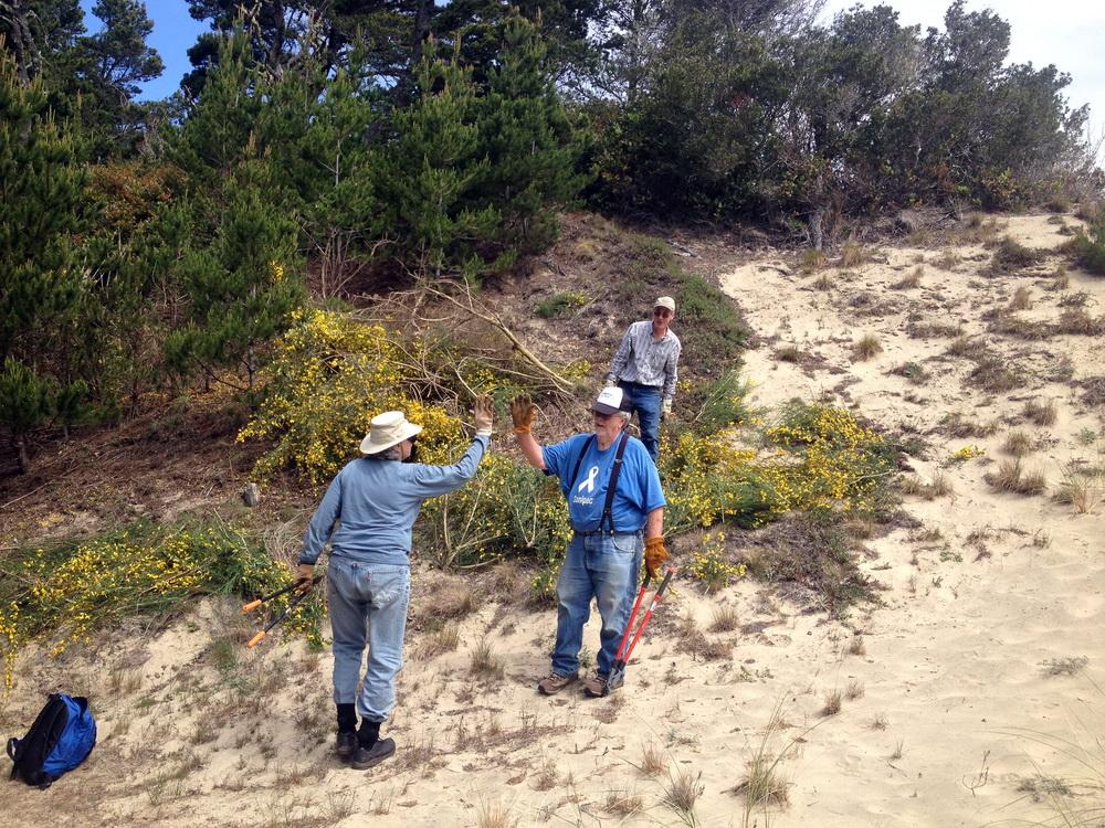 Volunteers celebrate removal of invasive Scotch Broom from Oregon Dunes.\Photo by Dina Pavlis.